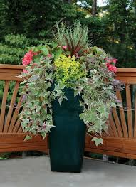 Plant Combination Ideas For Container Gardens 1123 Best Container Garden Images On Pinterest Floral