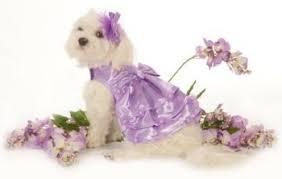 dog wedding dress bridesmaid dresses for dogs the wedding specialiststhe wedding
