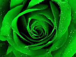 green roses green roses 31378 1600x1200 px hdwallsource