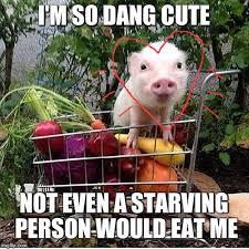 Eat Me Meme - baby pig please do not eat bacon imgflip
