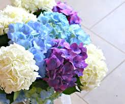 how to make flowers last longer 8 steps with pictures