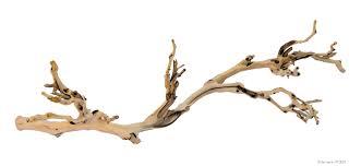 Vivarium Wood Decor Buy Natural Wood For Reptiles Online Reptile Centre