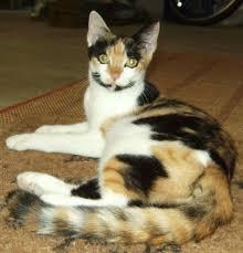 kitkats rescue delray beach fl