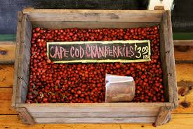 cape cod cranberry harvesting