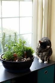 best 25 cat garden ideas on pinterest cat grass cat stuff and