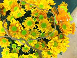 chadfreytag 3 6 freytags florist