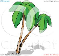 clipart silhouetted coconut palm tree royalty free vector