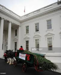 Washington Christmas Tree Farms - the white house christmas tree a 19 foo pictures getty images