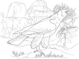 free printable eagle coloring pages for kids best eagle coloring