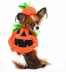 Halloween Costumes Puppies 72 Adorable Dog Costumes 2017 Halloween Costumes Lion