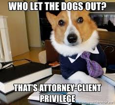 Who Let The Dogs Out Meme - who let the dogs out that s attorney client privilege dog