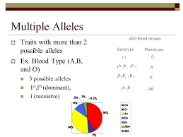 genetics honors biology ms pagodin ppt video online download