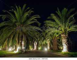 palm trees lit up at stock photos palm trees lit up at