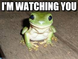 I M Watching You Meme - i m watching you ridiculously photogenic frog meme on memegen