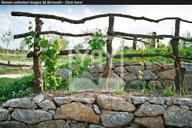 grapevine trellis on terrace image yayimages com