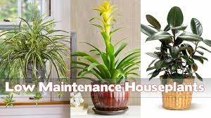 Best Houseplants 19 Best Low Maintenance Houseplants Youtube