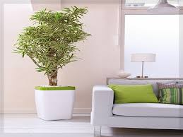 Wohnzimmer Pflanzen Ideen Wohnzimmer Pflanzen Wohnung Ideen