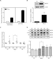 amyloid beta mediated hypomethylation of heme oxygenase 1