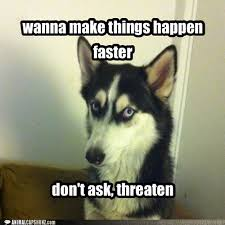 bad advice husky i has a hotdog dog pictures funny pictures of