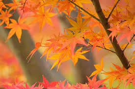 the science why leaves change color in the fall stemjobs