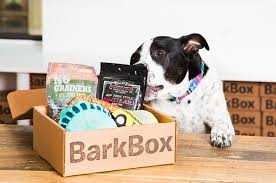 10 best christmas gifts for dogs presents your pup will love