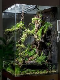 best 25 frog terrarium ideas on pinterest vivarium frog tank