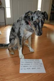 Dog Shaming Meme - click on the picture for more do shaming awesome all around
