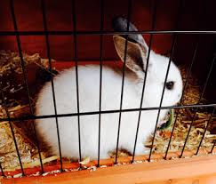 Sale Rabbit Hutches Rabbit Hutches Online Sale Melbourne Coops And Cages