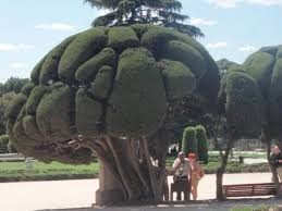 awesome trees like bonsai but bigger photo