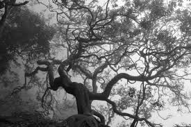 spooky desktop wallpaper trees monochrome branch nature spooky wallpapers hd desktop