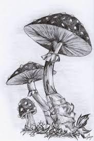 Drawing by Best 25 Mushroom Drawing Ideas On Pinterest Mushroom Art