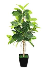 22 best house plants images on pinterest houseplants plants and