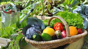 planting a home vegetable garden dominica vibes news