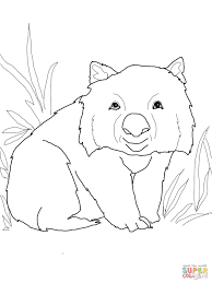 funny wombat coloring page free printable coloring pages