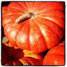 halloween journal connecticut garden journal unusual halloween pumpkins wnpr news