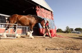 Budweiser Clydesdale Barn Budweiser Clydesdales Window On The Prairie