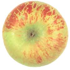 Online Fruit Trees For Sale - mature apple trees for sale online at trees direct