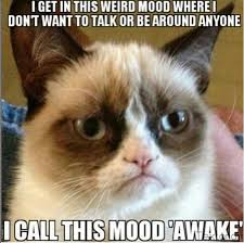 Mad Kitty Meme - bad mood cat pesquisa google funny pinterest bad mood
