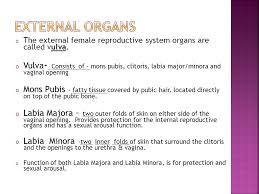 mons pubis hair ms kehoe 9 th grade health o the external female reproductive mons