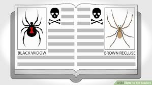 I Tried Killing A Spider - how to kill spiders 11 steps with pictures wikihow
