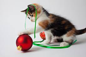 calico kitten christmas ornaments photograph garry