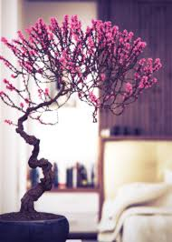 Best Plants For Bedrooms Interior Gorgeous Picture Of Modern Living Room Decoration Using