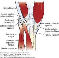 Lateral Patellar Ligament Knee Brunnstrom U0027s Clinical Kinesiology 6e F A Davis Pt