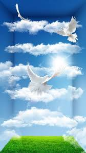 251 best dove images on frames messages and