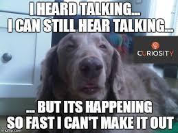 Talking In Memes - high dog meme imgflip