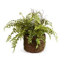 18 indoor plants for home decor indoor plants all over the