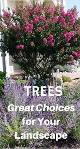 Backyard Shade Trees 86 Best Shade Trees Images On Pinterest Shade Trees Garden