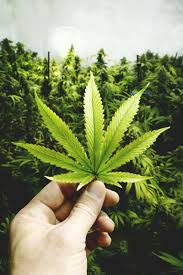 Overdone Canopy Growth Corp Is The Sell Off Overdone