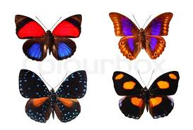 colourful butterflies stock photo colourbox