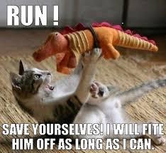 Cat Facts Meme - fascinating cat facts 404 error com404 error com
